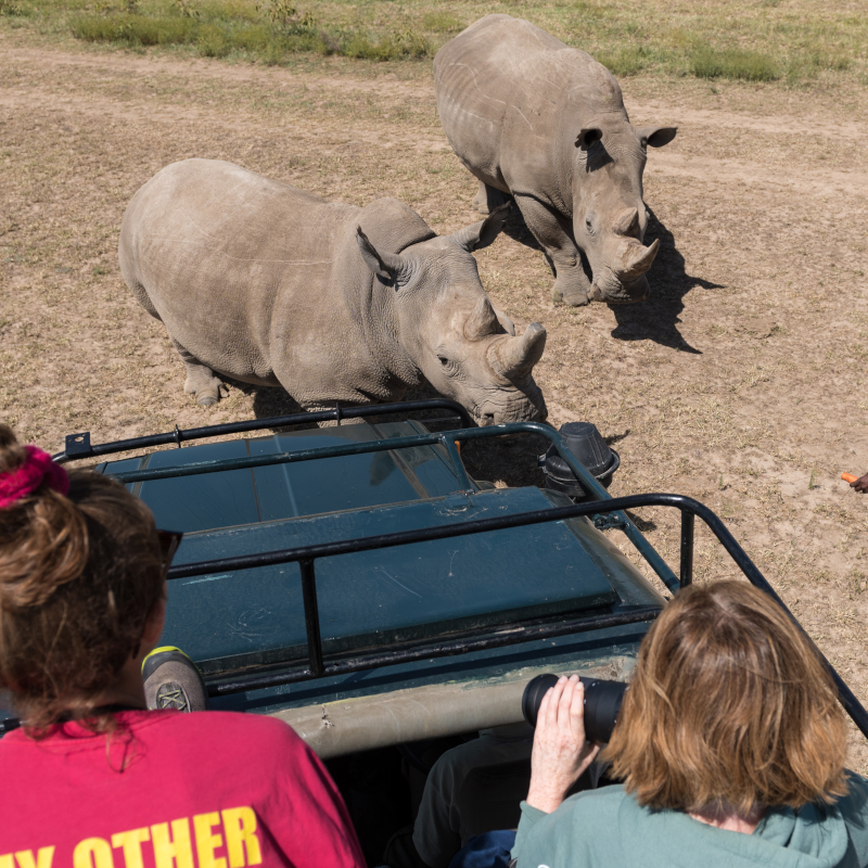Getting up close to Rhinos
